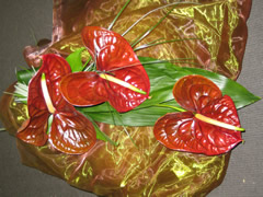 Anthurium flowers - One Variety of Flower