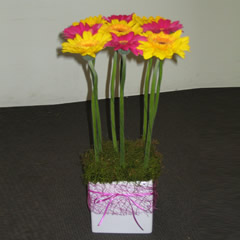 Gerbera Pot - Arrangements