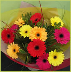 Gerbera Bouquet - One Variety of Flower