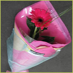 Gerbera Gift Wrapped - One Variety of Flower