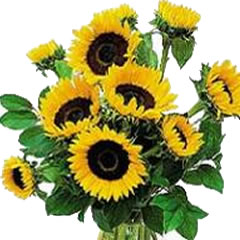 Sunflowers - One Variety of Flower